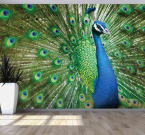 Pavo real azul con pumas verde – M 809